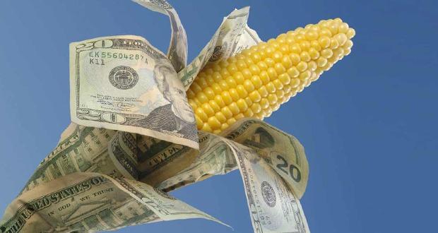 кукуруза с деньгами
